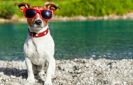 Pets In Travel – Summer Fun