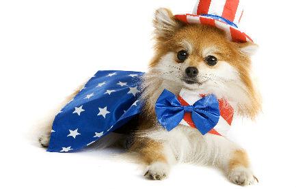 Pets In Travel – Patriotism