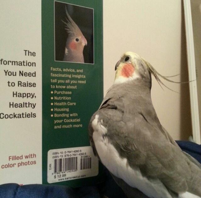 Suz Bird