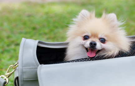 Best Airlines to Fly with Pets